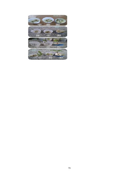王可昕生活照_http://ibook.ltcvs.ilc.edu.tw/books/a0168/5/ 羅商專題製作叢刊第4期-2012.05